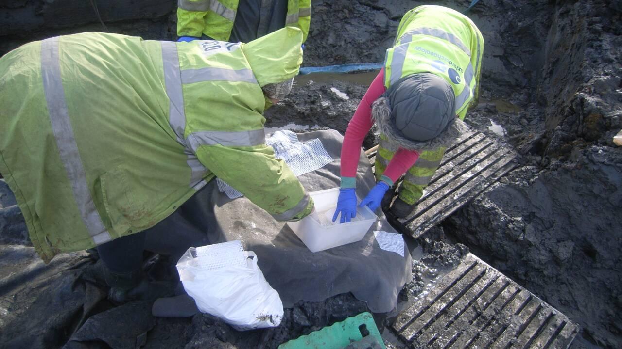 En Angleterre, des archéologues découvrent quatre œufs de poule millénaires… et en brisent trois par accident