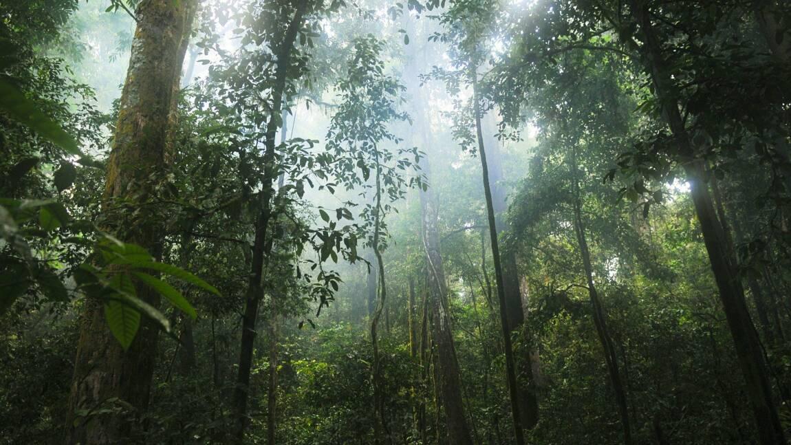 Biodiversité : plus de 30 000 espèces sont menacées dans le monde