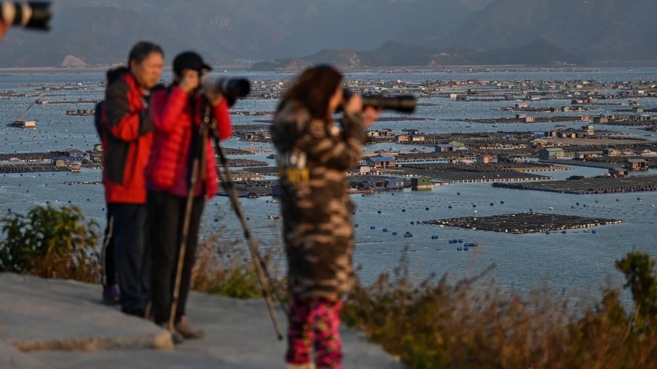 En Chine, des vasières sont le nouveau spot incontournable des photographes
