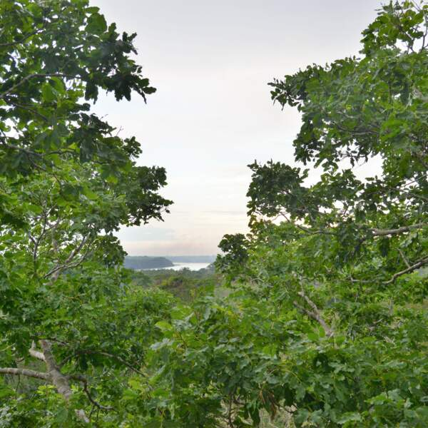 Végétation à Puerto Maldonado