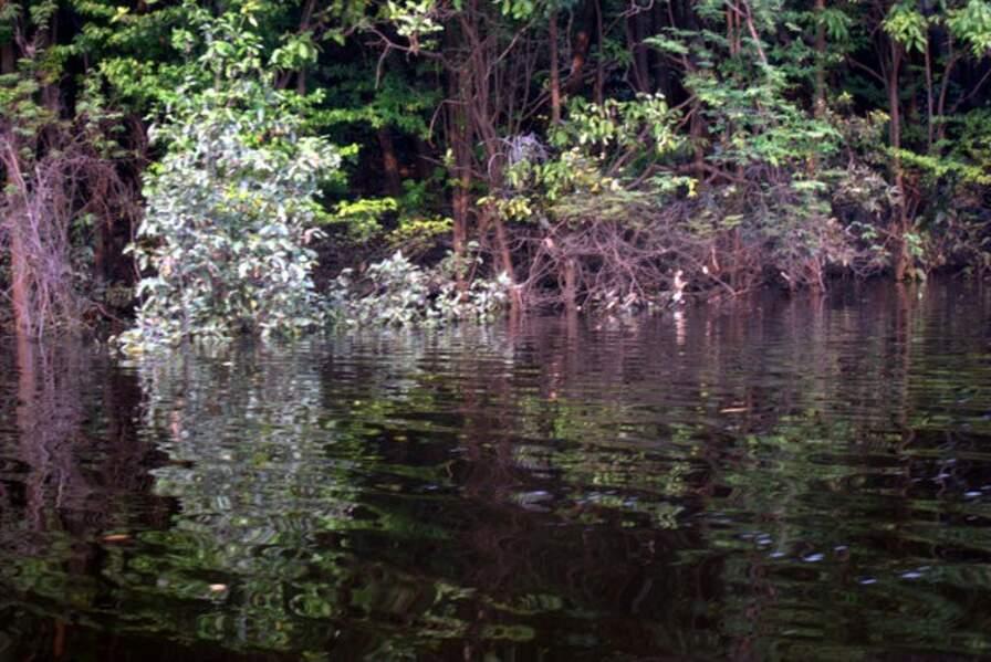 Reflets sur le fleuve