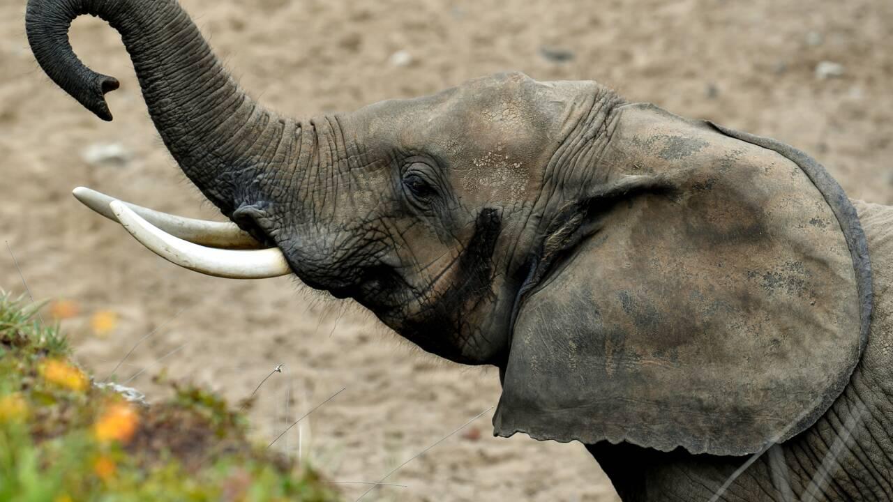 """Acheter un zoo pour libérer les animaux : cherche 600.000 euros pour """"pari fou"""""""