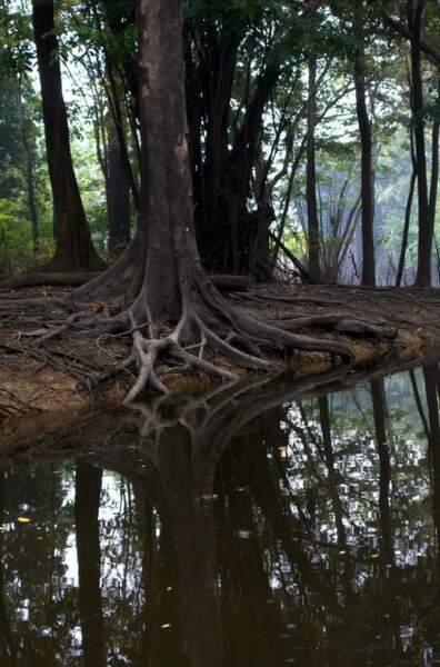 Nature sauvage en Amazonie