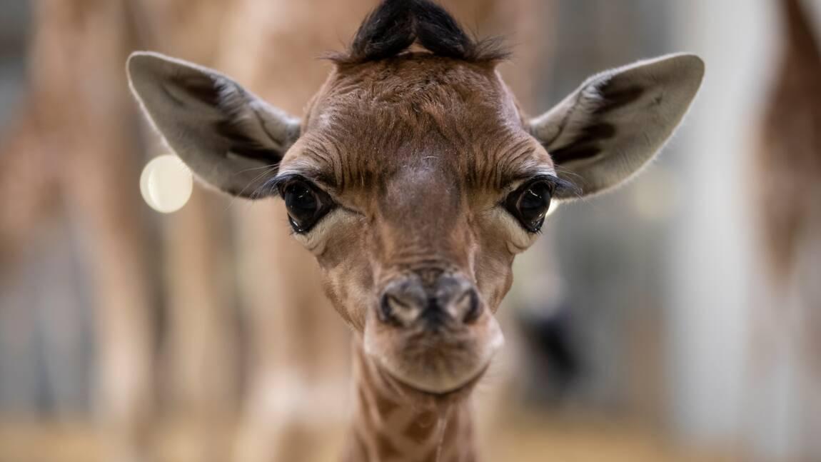 Des ONG veulent racheter un zoo pour préparer le retour des animaux à la nature