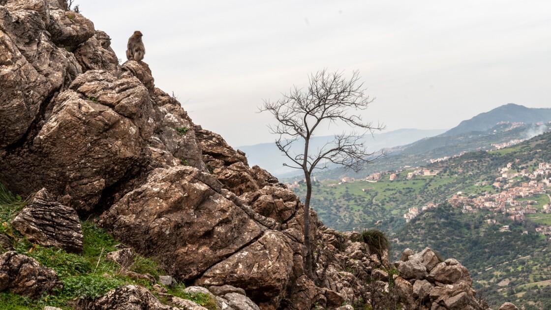 Algérie : l'écrivaine Kaouther Adimi raconte son dernier été sur la route de l'est