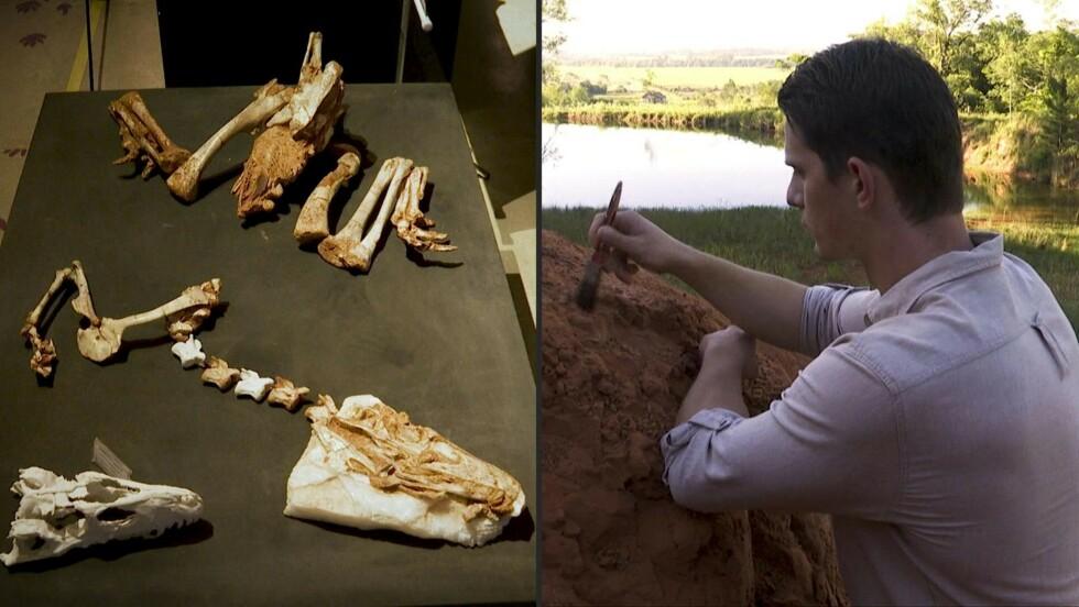 La pampa du Brésil, un sanctuaire florissant de dinosaures pré-jurassiques