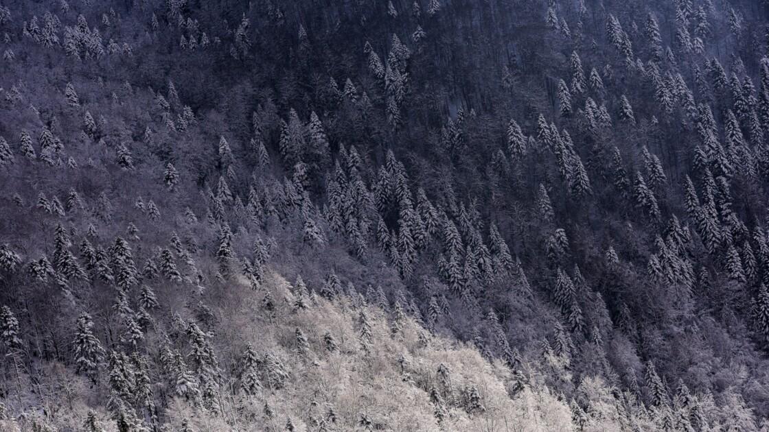 Des scientifiques pensent avoir découvert la plus vieille forêt du monde