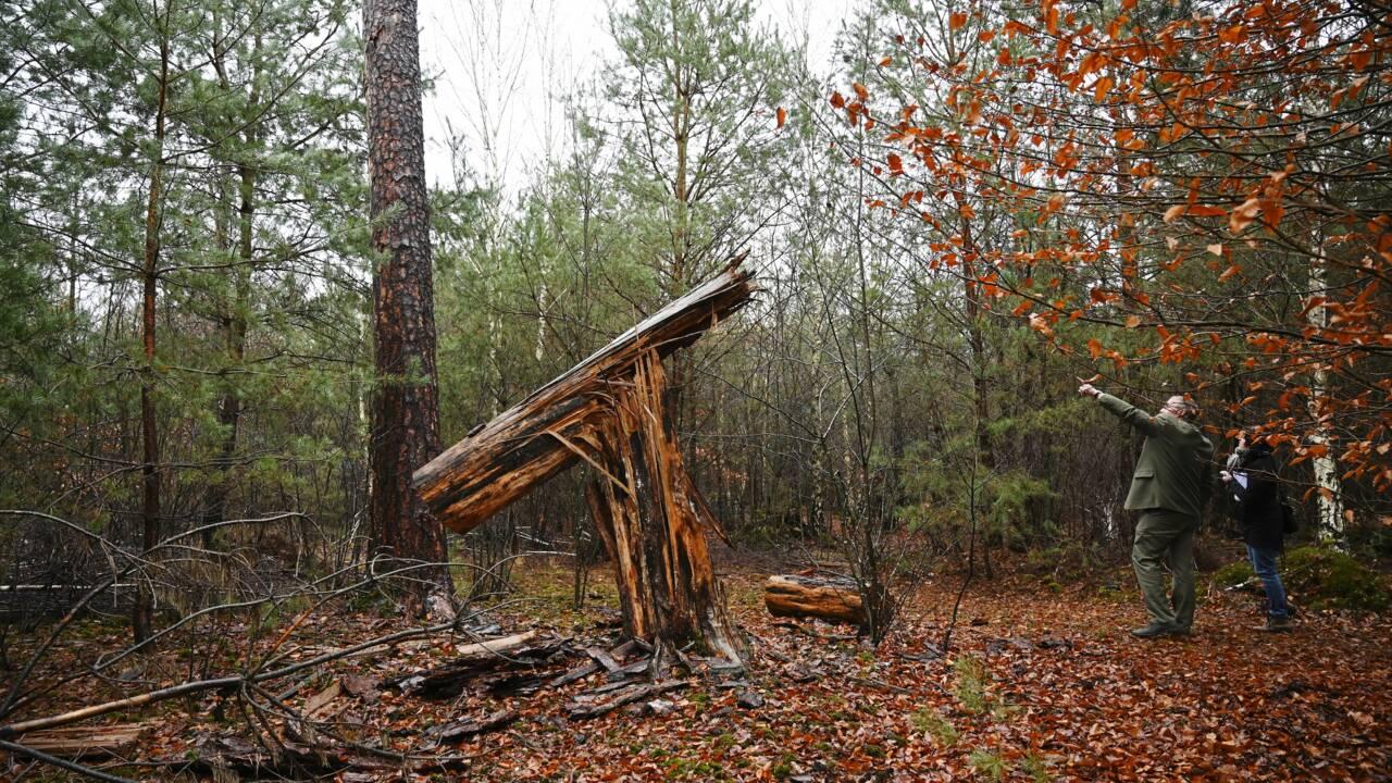 Vingt ans après la tempête de 1999, la forêt face à une nouvelle catastrophe