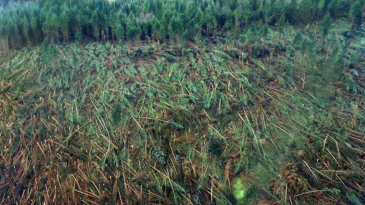 """La tempête de 1999, """"une rupture dans la pyramide des âges"""" de la forêt"""