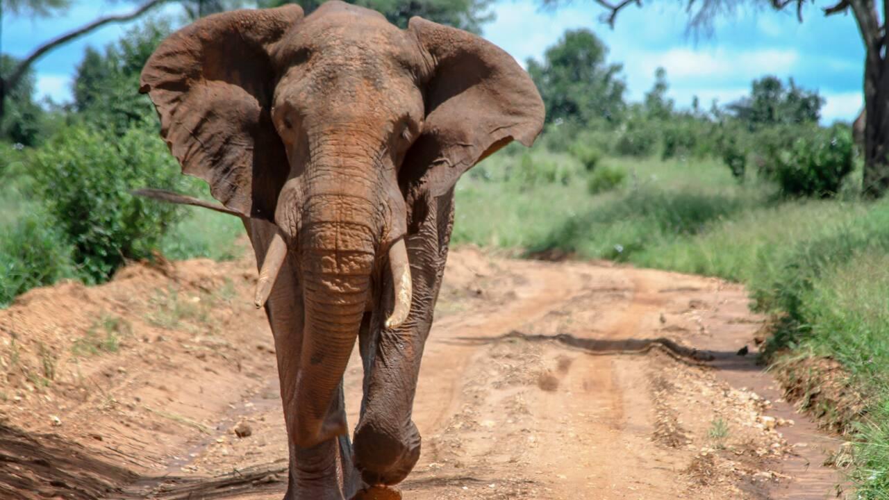 Elephant Haven, le sanctuaire pour éléphants, sera achevé en 2020 dans le Limousin