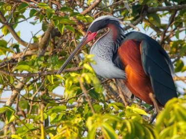 Faune sauvage : les plus belles images de 2019 de la Wildlife Conservation Society