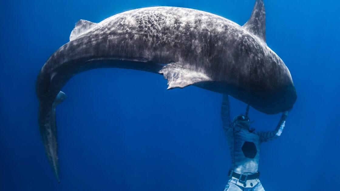 Polynésie: l'apnéiste Pierrick Seybald endort les requins-tigres