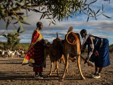 Tanzanie : immersion en pays masai