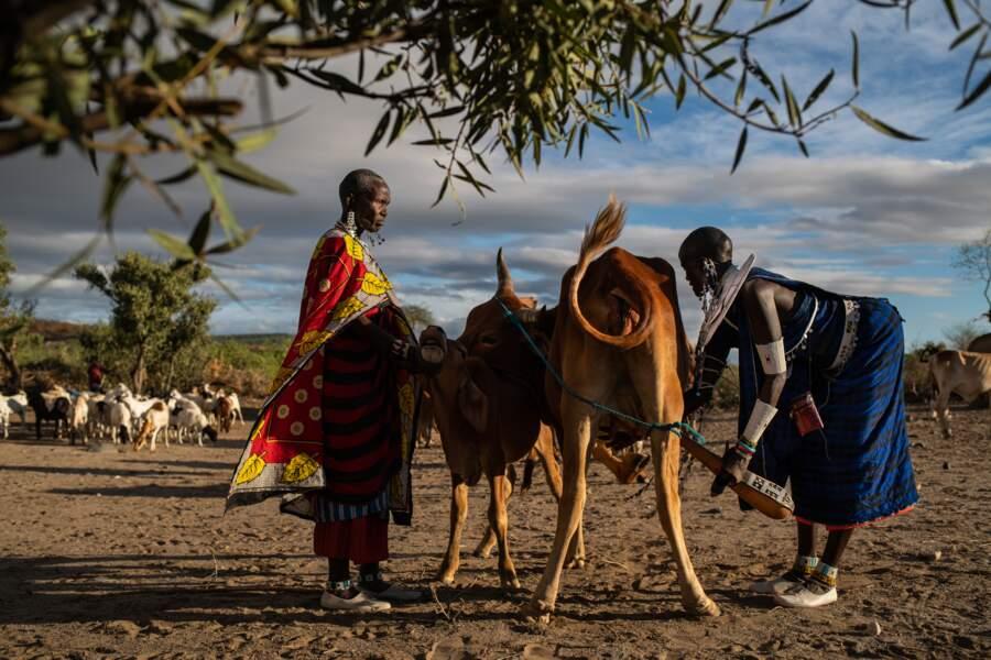 La vie quotidienne s'organise autour du bétail