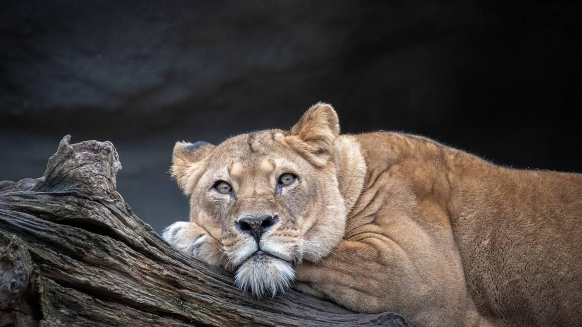 Intelligence artificielle : Google veut contribuer à la préservation de la faune sauvage