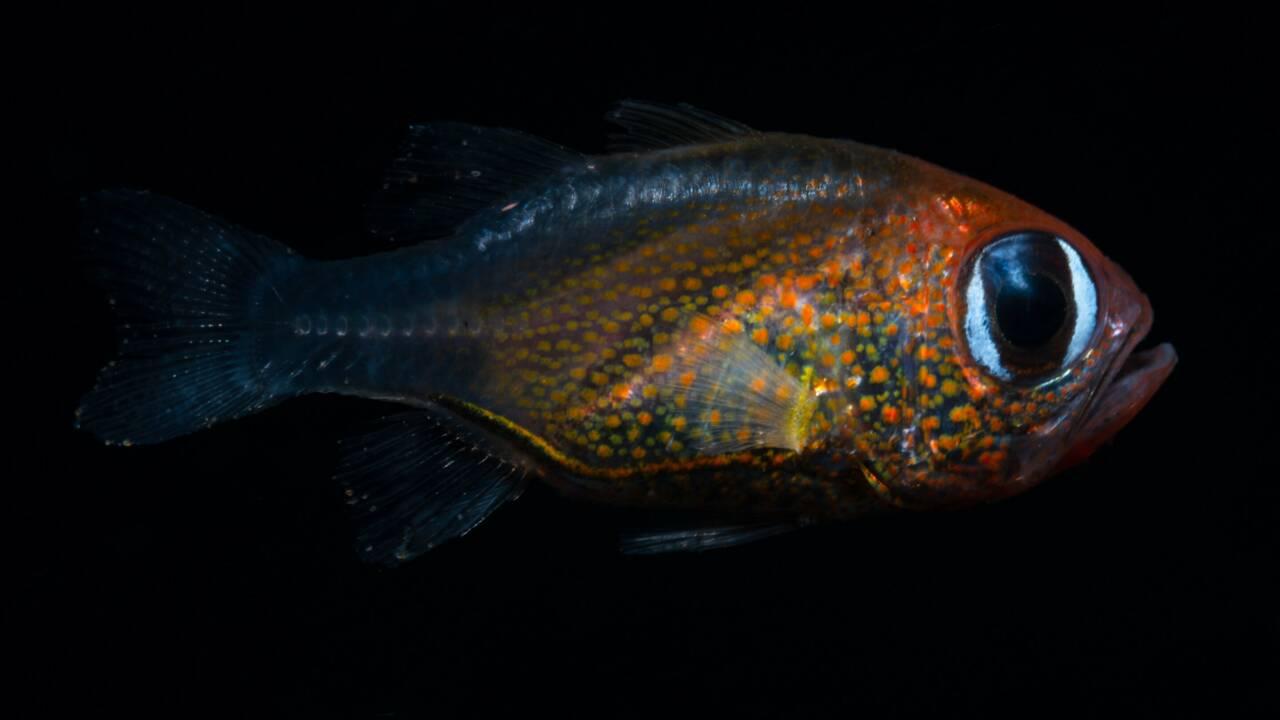 71 nouvelles espèces animales et végétales ont été identifiées par les scientifiques en 2019