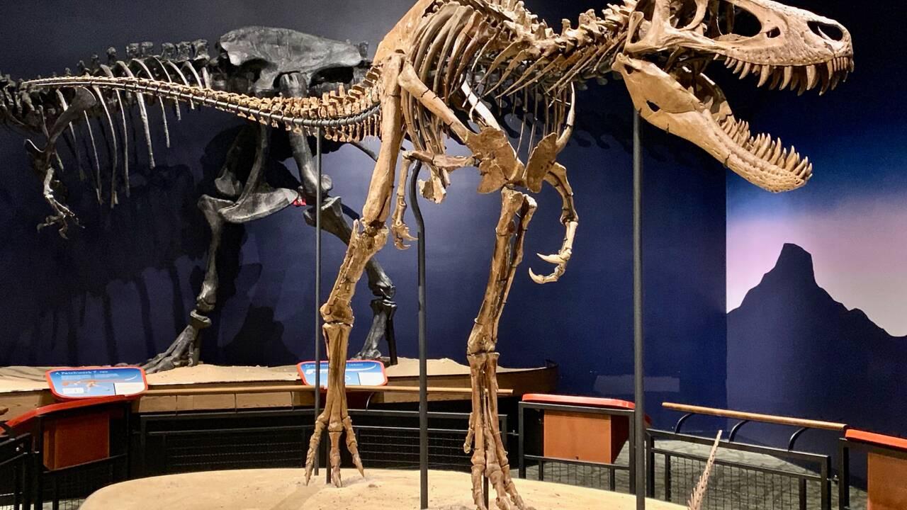 Des fossiles de jeunes T. rex réfutent l'existence d'une espèce naine