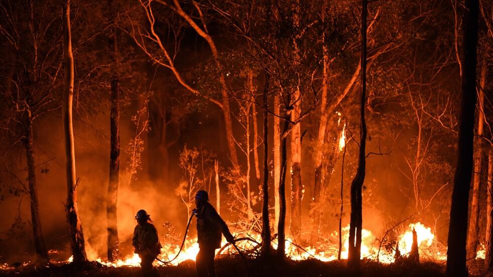 Incendies en Australie : plus de 500 millions d'animaux seraient déjà morts, d'après des chercheurs