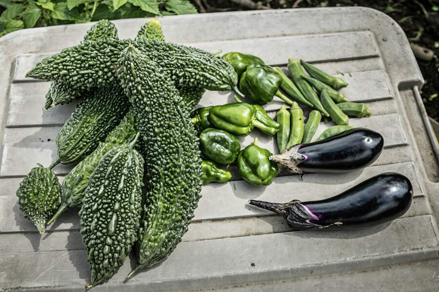 La récolte au jardin partagé d'Osawa
