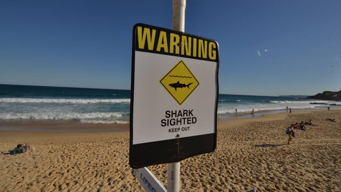 Un homme tué par un requin dans le sud-ouest de l'Australie