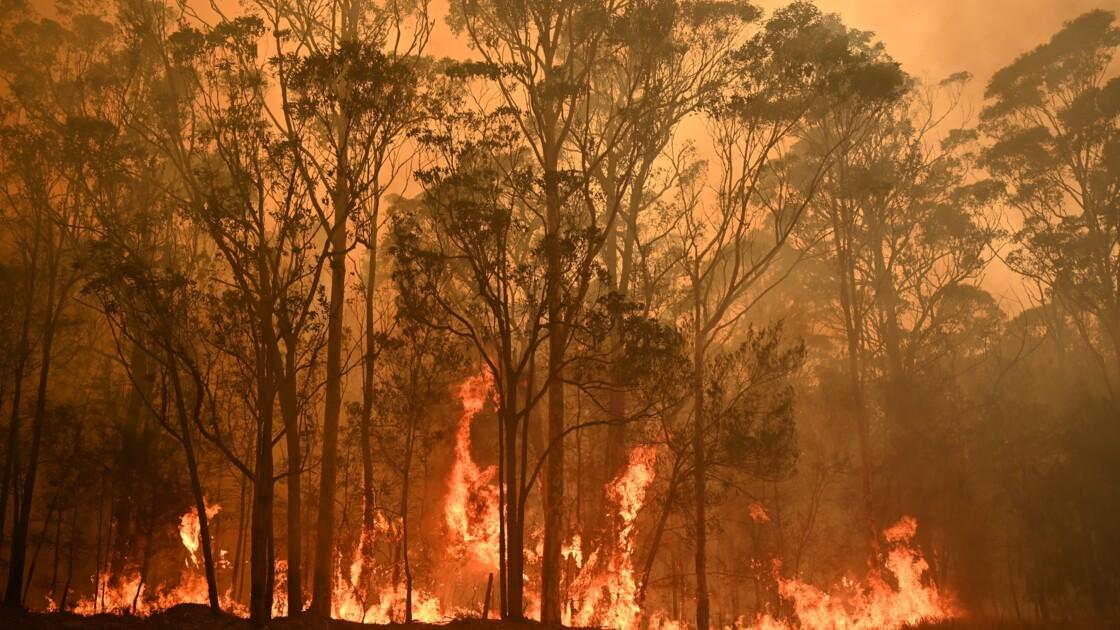 Les feux de forêts ont touché 75% des Australiens, selon une étude