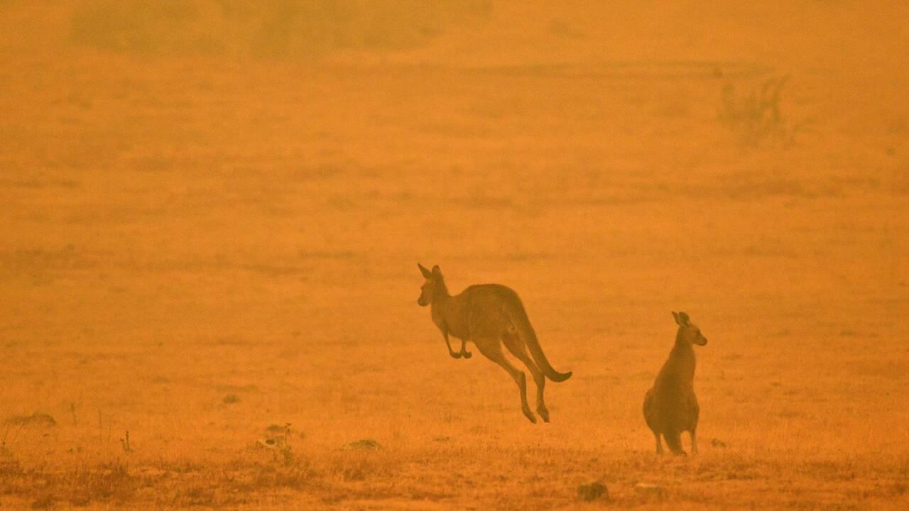 """Enquête sur les feux en Australie: cela pourrait ne pas être un """"événement unique"""""""