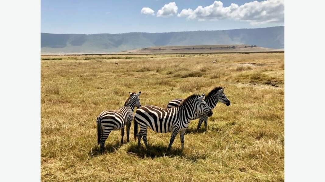Zèbres dans le cratère du Ngorongoro