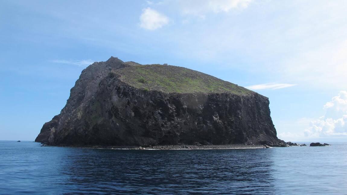 Comment une petite île des Caraïbes a ressuscité en éliminant les espèces qui la ravageaient