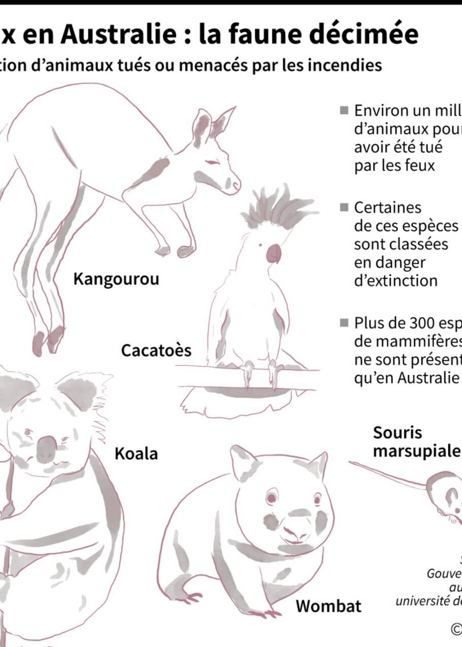 Australie: les feux de forêt pourraient être fatals à certaines espèces