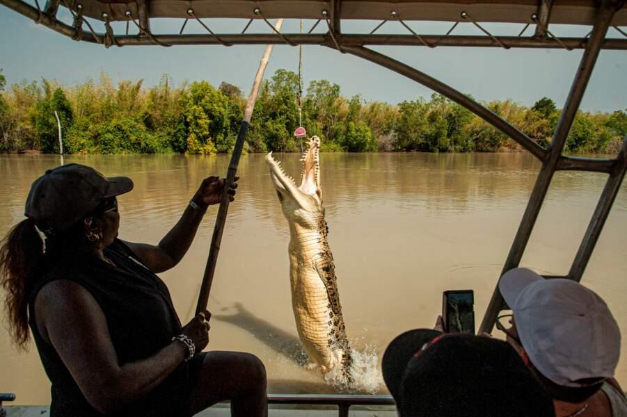 Le crocodile, attraction touristique