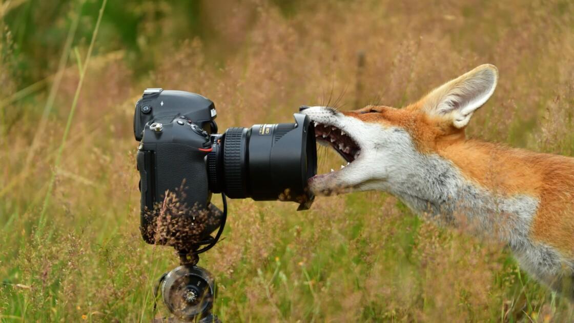 Photographie animalière : nos clichés préférés pour alerter sur la fragilité des espèces