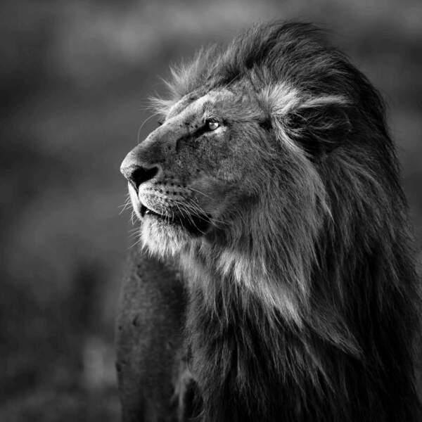 Lion par Véronique et Patrice Quillard