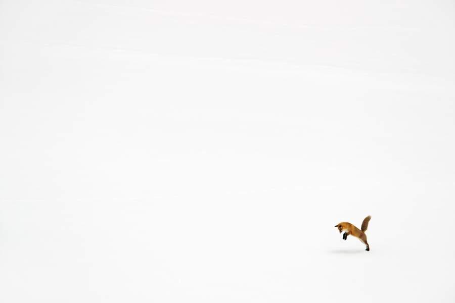 Renard par Adrien Favre