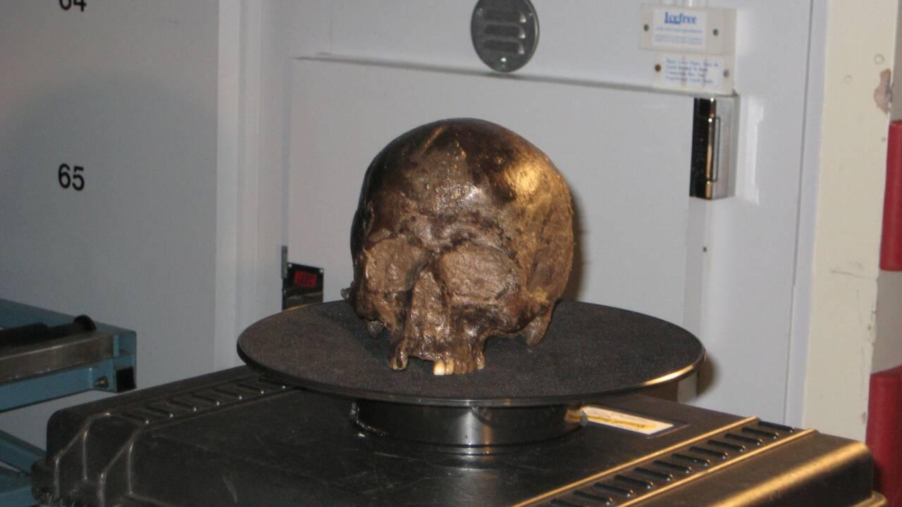 Le secret d'un cerveau humain resté préservé pendant 2600 ans enfin percé ?