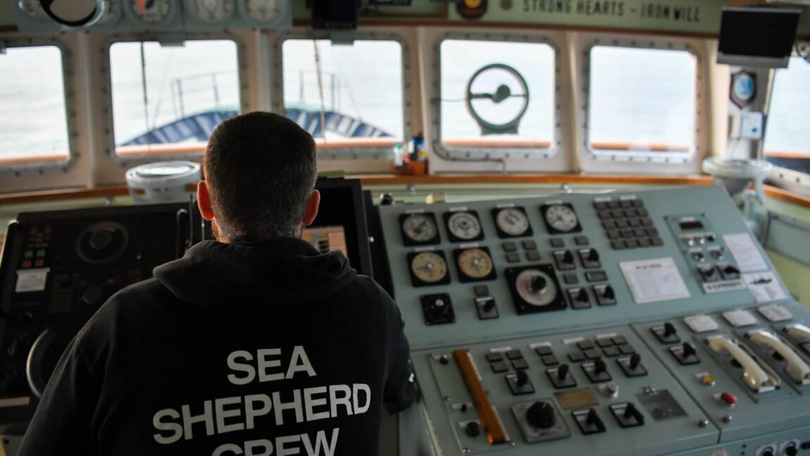 Les dauphins, victimes de captures accidentelles dans le golfe de Gascogne
