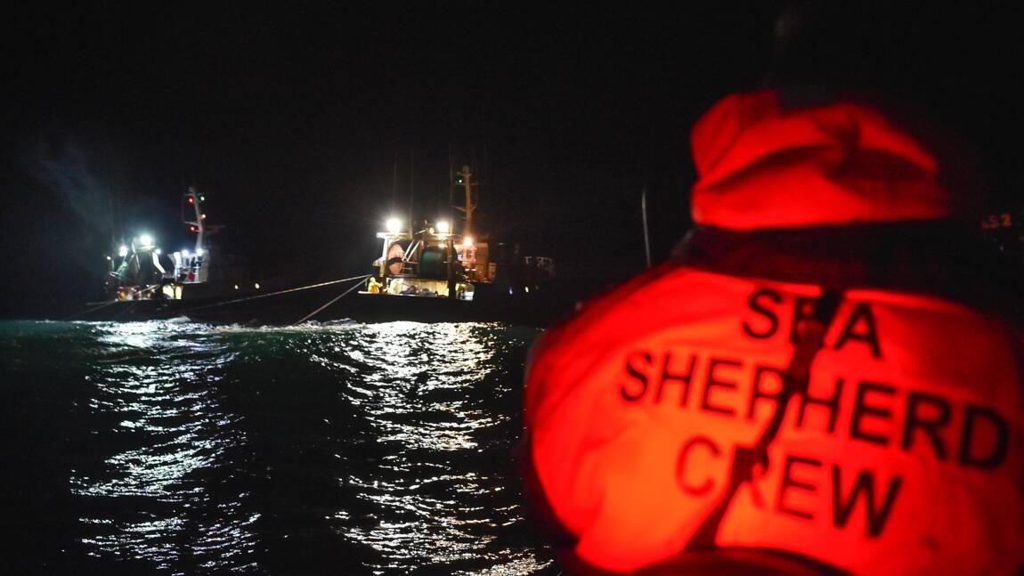 Sea Shepherd dénonce le dépeçage d'un dauphin par des pêcheurs