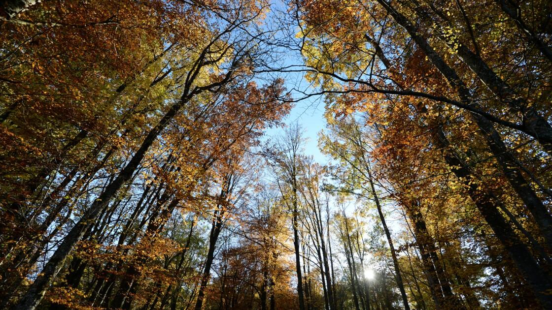 Le Parlement adopte un texte pour protéger la forêt francilienne