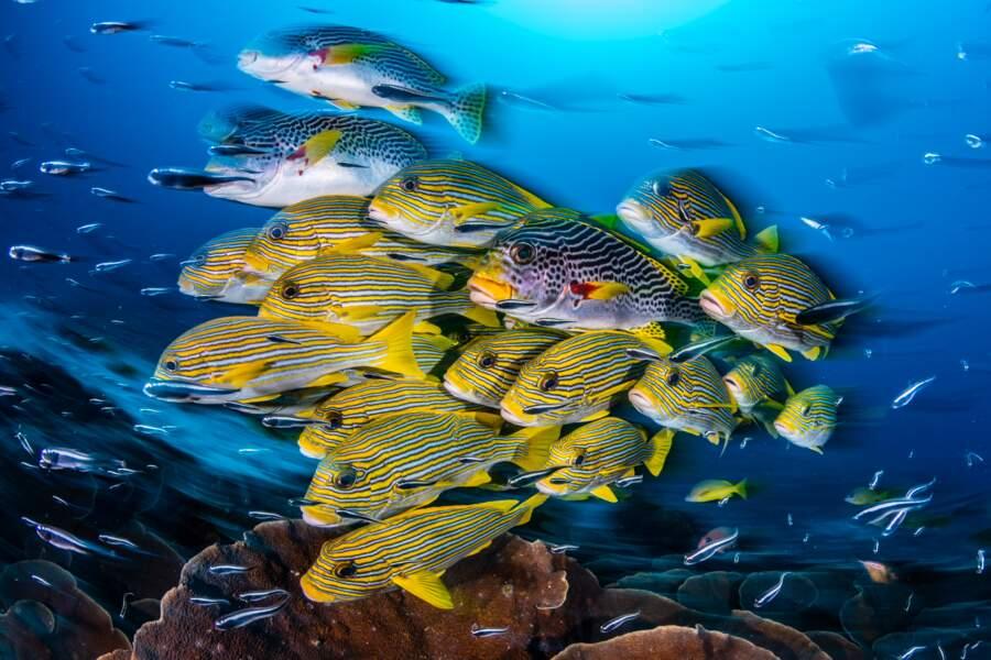 Nuée de poissons