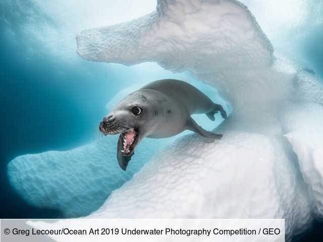 Océan : les plus belles photos de faune sous-marine capturées en 2019