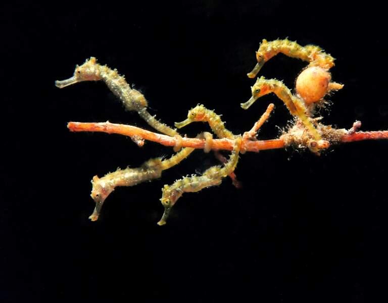 Bus d'hippocampes
