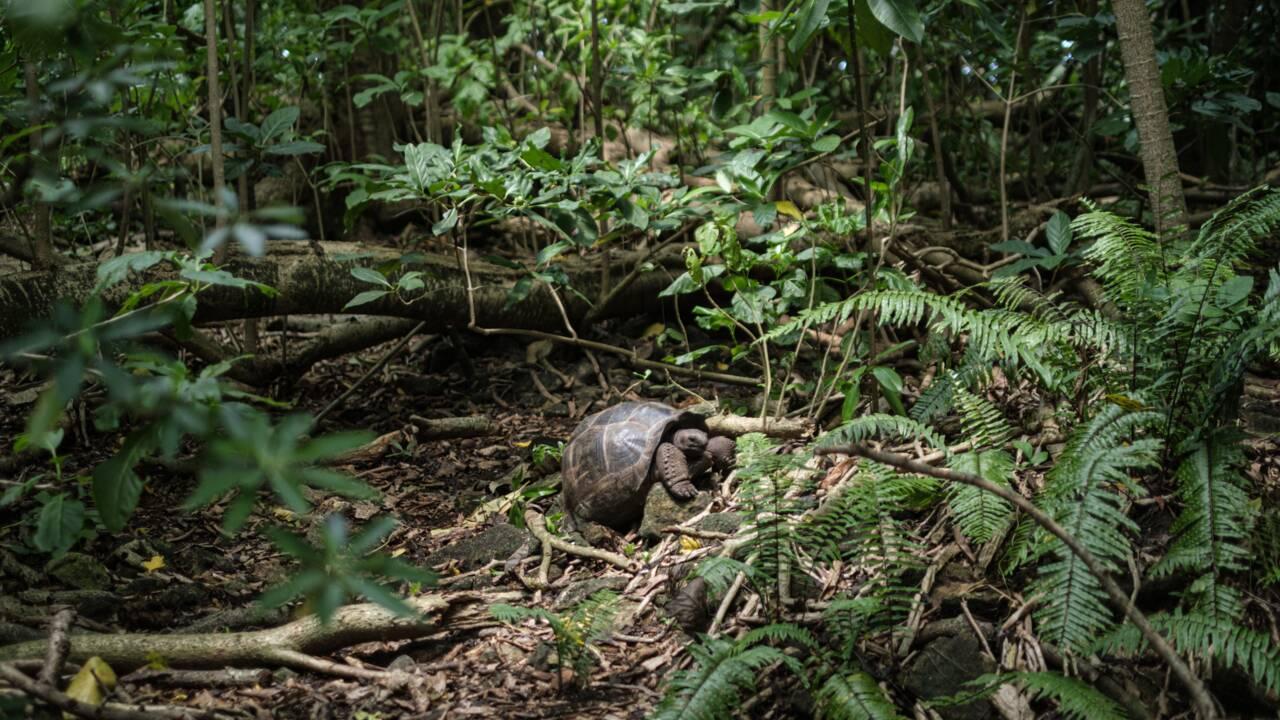 Seychelles : l'île Cousin ou le retour à la nature pour sauver un oiseau
