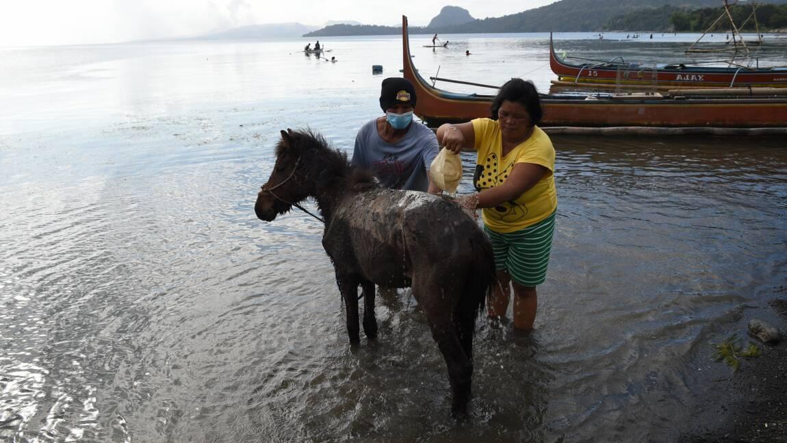 Volcan philippin: des chevaux secourus après une mission dangereuse
