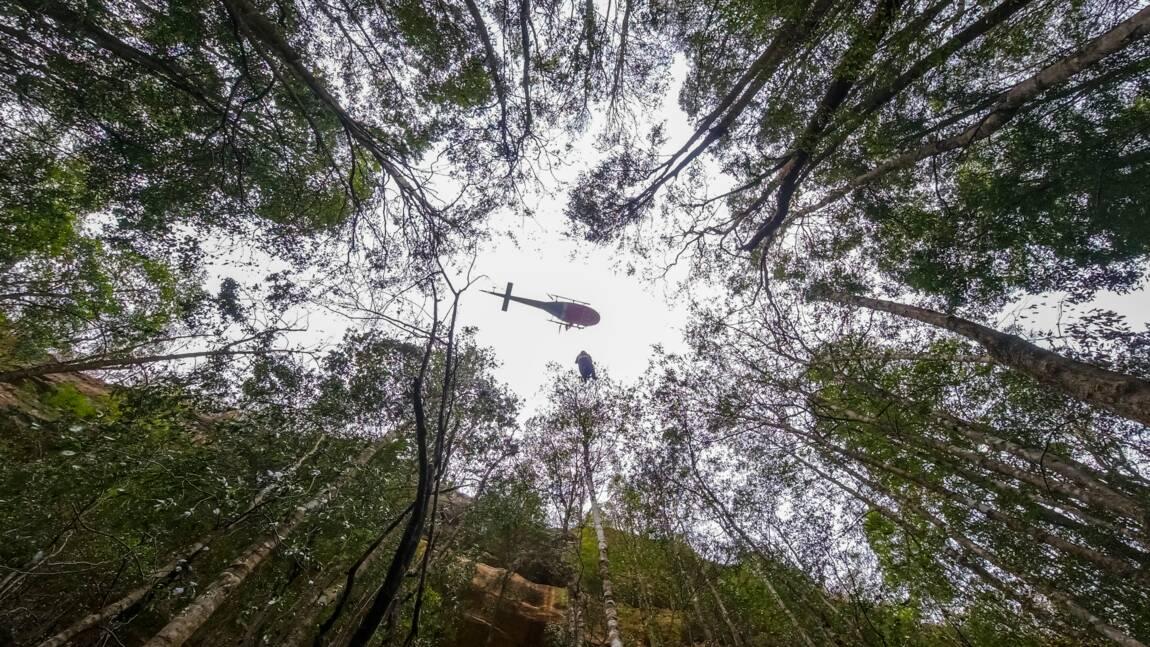 Australie: mission secrète pour sauver des arbres préhistoriques des incendies