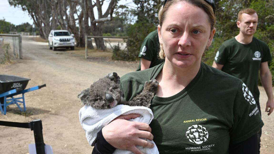 Australie: des espèces menacées durement frappées par le feu