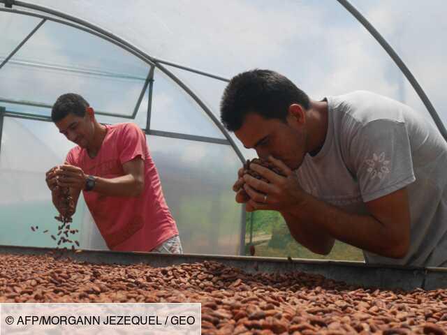 Brésil: le cacao bio commence à sortir des petits paysans de la misère