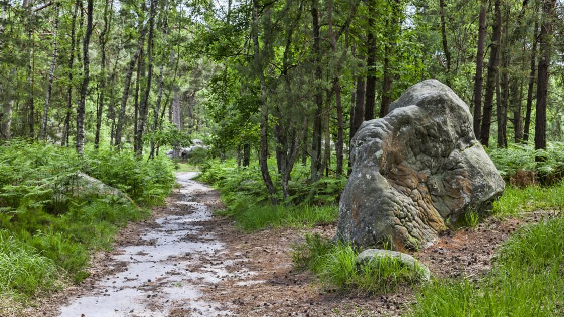Les 10 randonnées les plus populaires d'Ile-de-France en 2019 selon Helloways