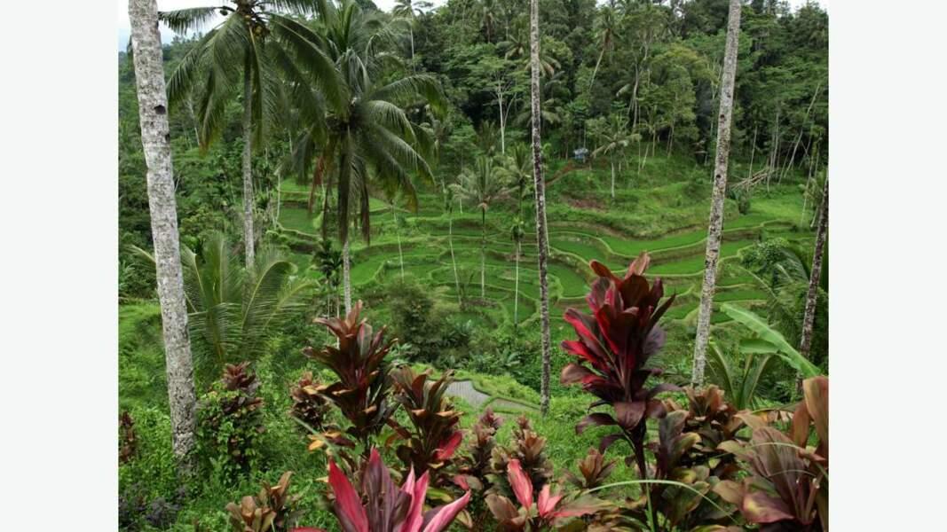 """Le Taman Sari (""""jardin des fleurs"""" en javanais), site de la ville de Yogyakarta où se trouvait un jardin créé par le premier sultan"""