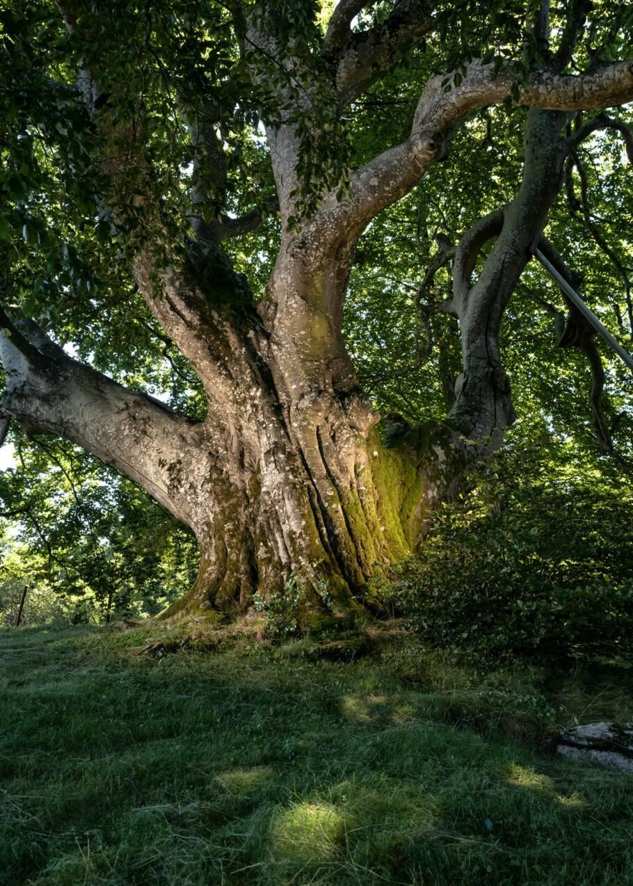 Arbre de l'année 2019 : le palmarès des plus beaux arbres du patrimoine français dévoilé