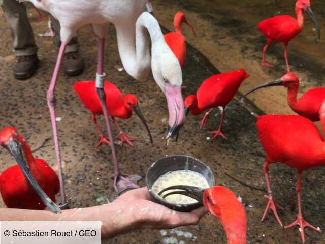 Au Brésil, visite du « Parque das Aves », un sanctuaire pour les oiseaux