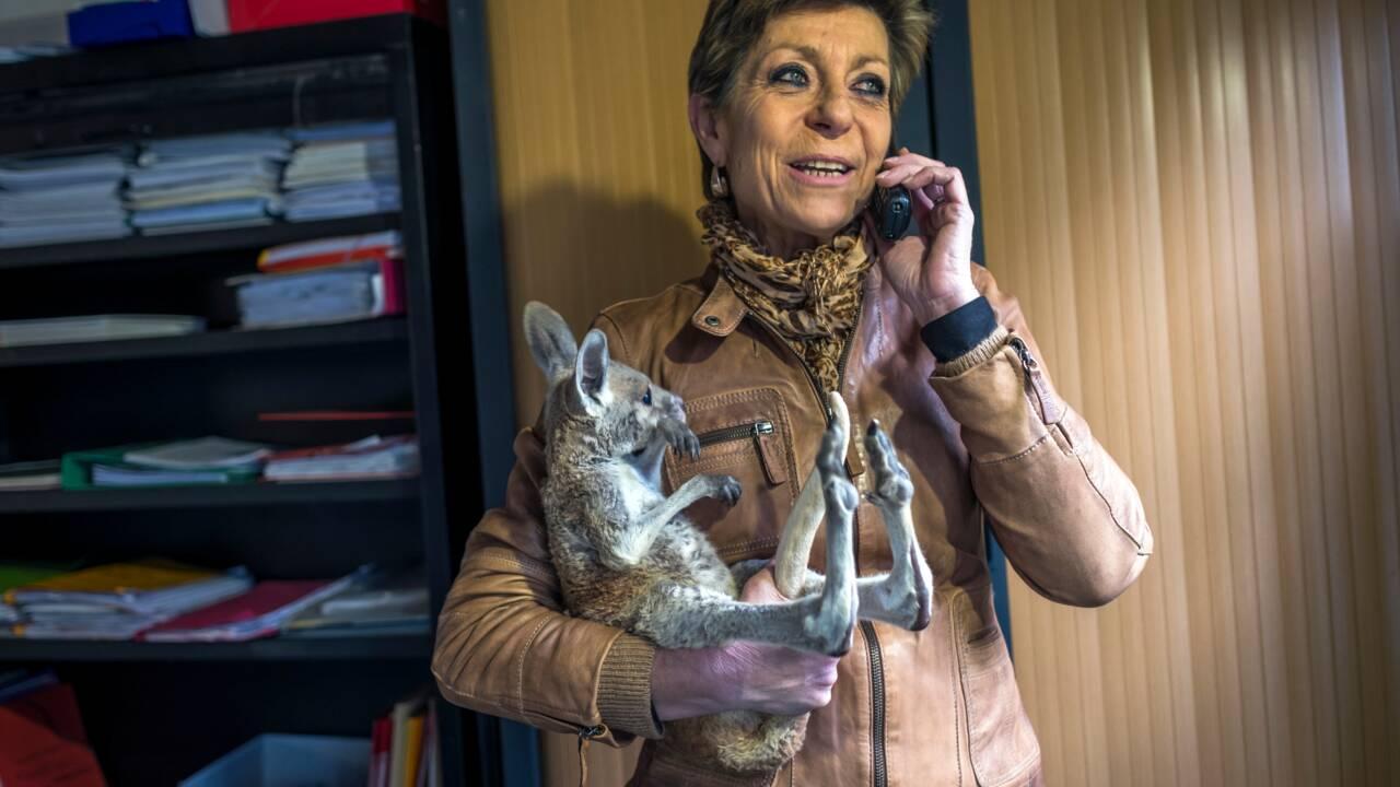 Feux en Australie: mobilisation en France au secours des marsupiaux orphelins